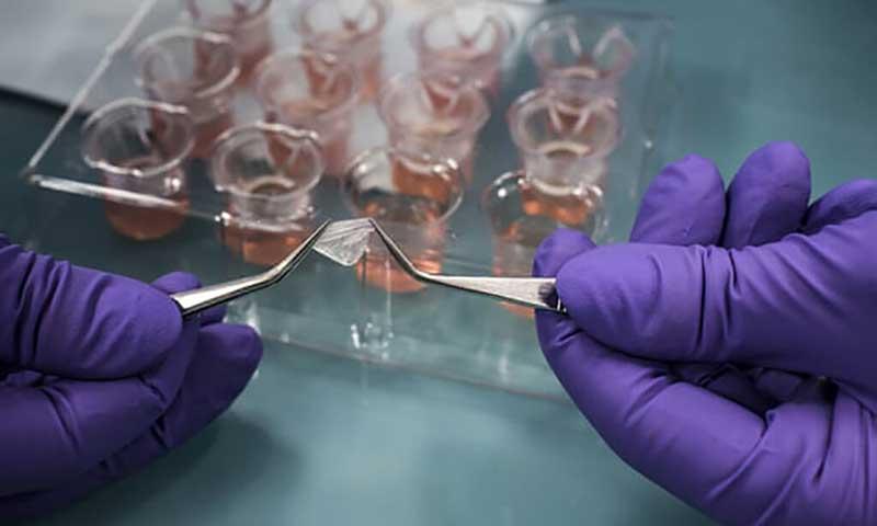 Este laboratório da L'Oréal cultiva células para produzir tecido humano que pode ser usado como uma alternativa aos testes em animais para cosméticos (Crédito: Jean-Philippe Ksiazek/AFP/Getty Images)