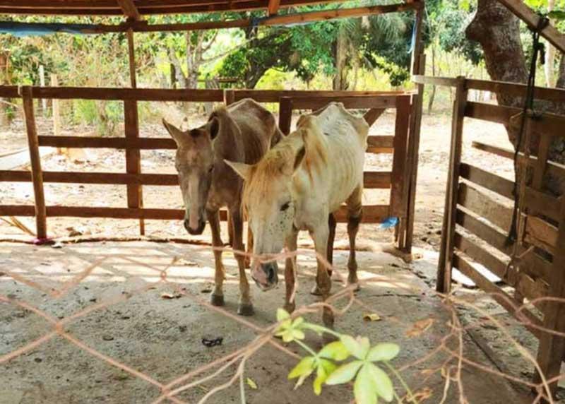 Cavalos são resgatados de abatedouro clandestino em Aparecida de Goiânia, GO