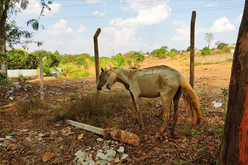 Abatedouro clandestino | Foto: Divulgação / Semma