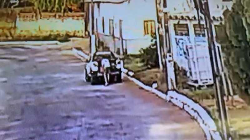 Homem abandona oito filhotes de cachorros e Polícia Civil de Goiandira (GO) investiga o crime; veja vídeo