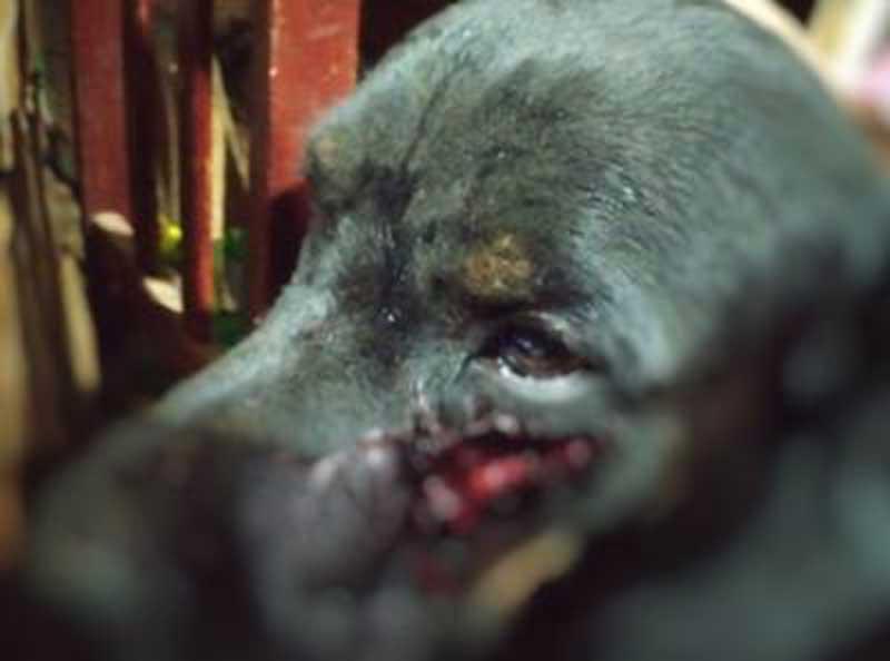 Maus-tratos: homem é preso por cortar cachorro com facão em Goiás