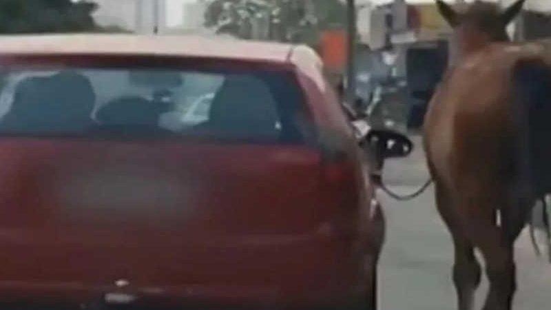 Cavalo é puxado por passageiro de carro em movimento, em Aparecida (Foto: Vídeo - TV Anhanguera)