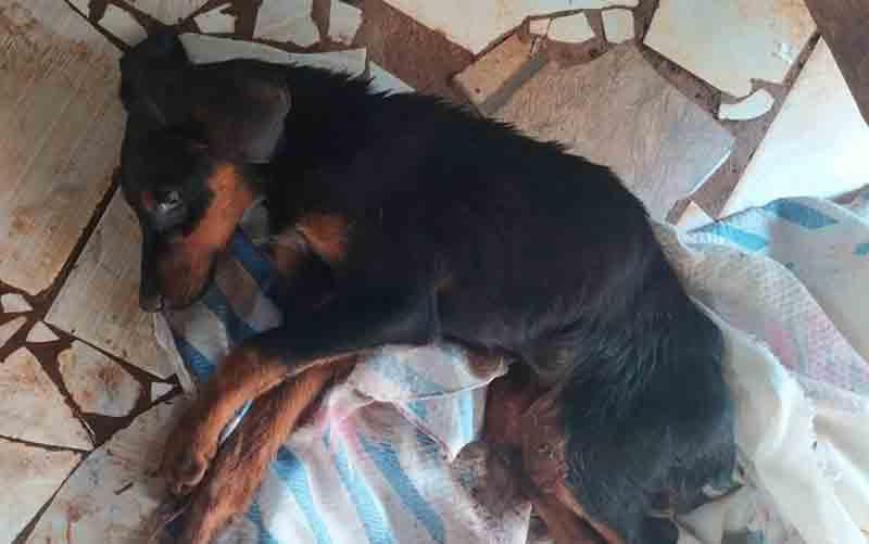 Cachorro morre após maus-tratos em Itumbiara — Foto: Divulgação/Polícia Civil