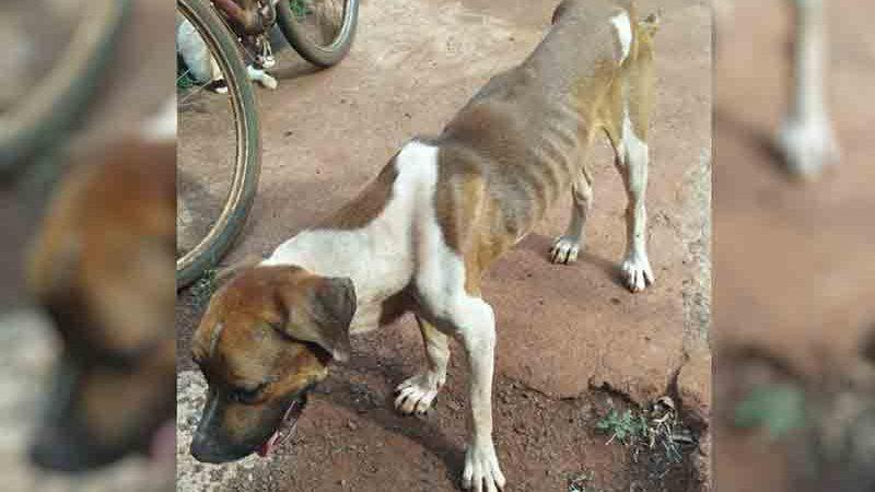 Homem é preso suspeito de maus-tratos contra cães em Itumbiara — Foto: Divulgação/Polícia Civil