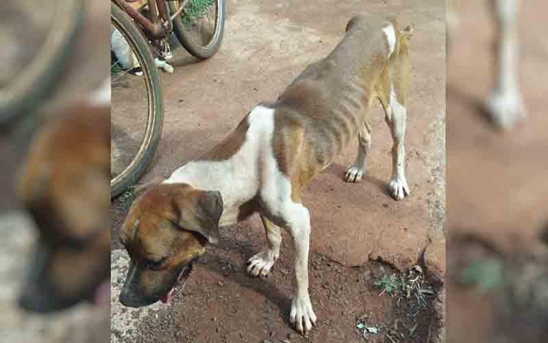 Homem é preso suspeito de maus-tratos a dois cachorros em Itumbiara, GO