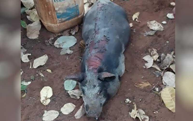 Morador filma quando fogo atinge fazenda e mata animais em Jataí, GO: 'Não consegui soltar as galinhas'