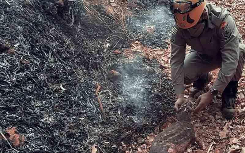 Antes que a corporação conseguisse levá-la ao Cetas, a paca morreu — Foto: Divulgação/Corpo de Bombeiros