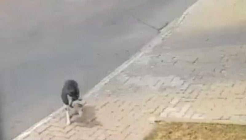 Homem é flagrado espancando cachorro em Aparecida de Goiânia, GO