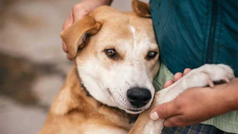 Será ilegal abandonar e maltratar animais na Grécia graças a novas leis (Shutterstock)