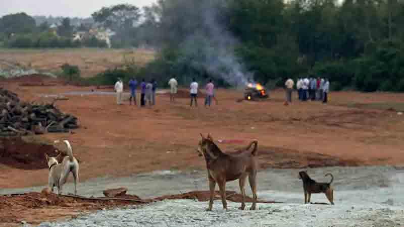 População aterrorizada com latidos vindos de vala comum onde 150 cães foram enterrados vivos na Índia