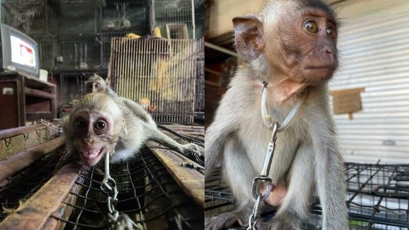 Bebês primatas são vendidos abertamente no Satria Bird Market