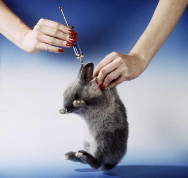 Testes com animais em laboratórios de Dublin podem em breve ser coisa do passado, após votação histórica da União Europeia