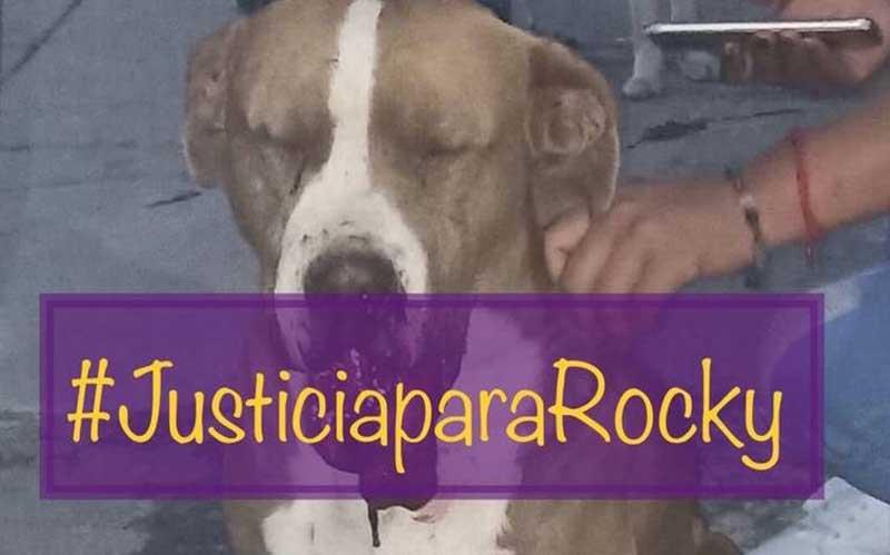 'Repreensível', caso de cachorro morto após explosão de fogos de artifício, diz ministro no México