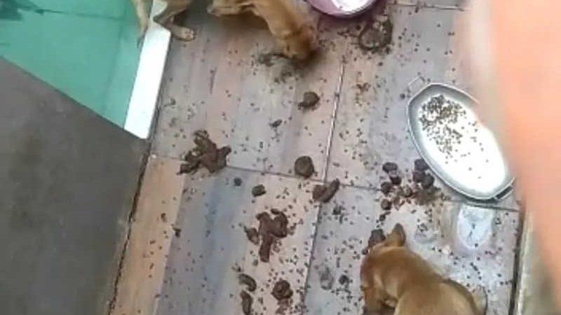 Cães e gatos em situação de maus-tratos — Foto: Reprodução