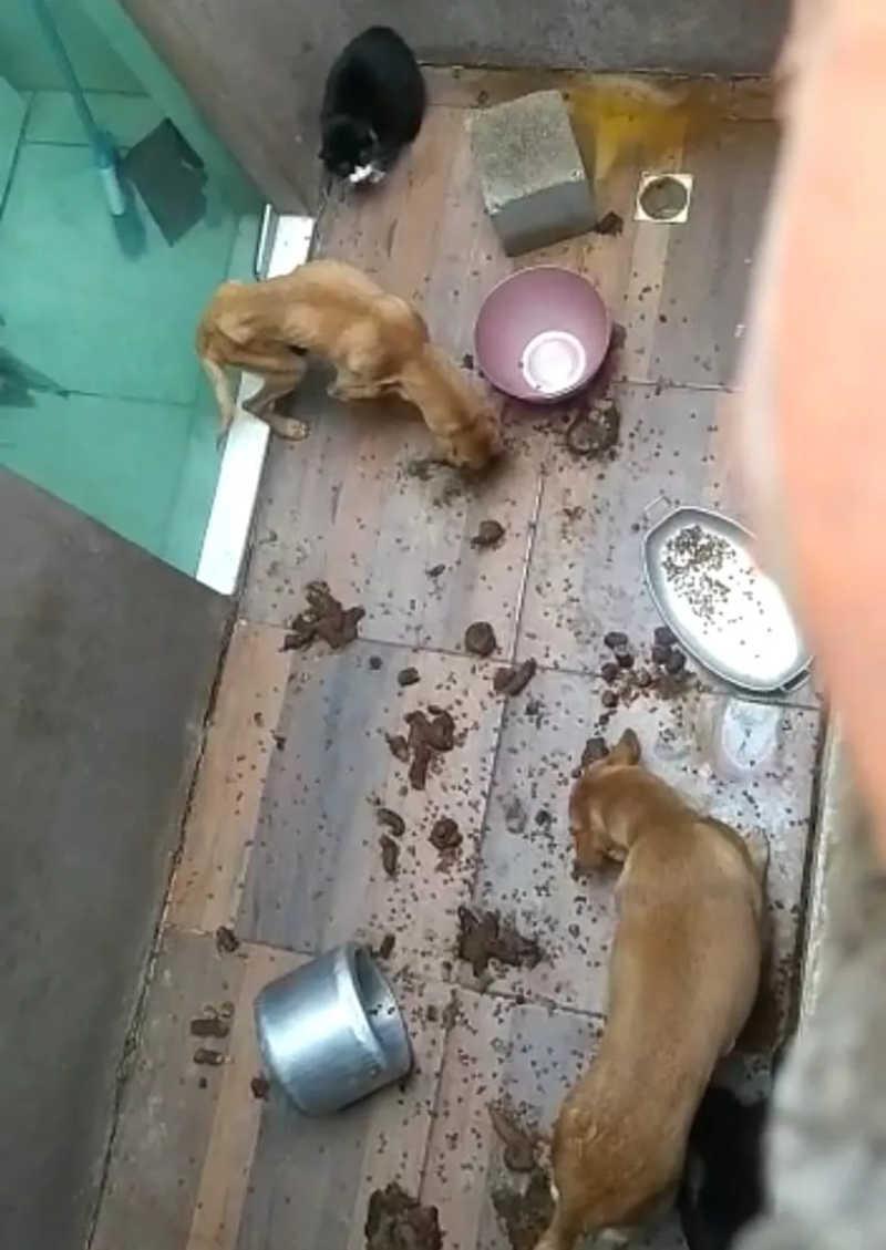 VÍDEO: cães e gatos são flagrados em situação de maus-tratos em Divinópolis, MG