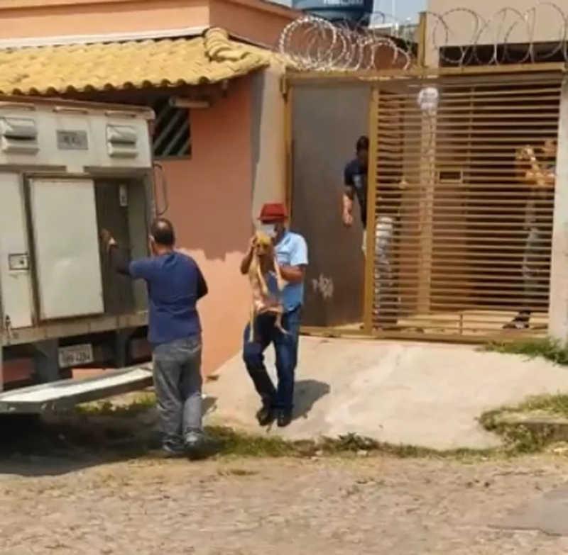 VÍDEO: cães e gatos com sinais de maus-tratos são resgatados de casa após denúncia em Divinópolis, MG