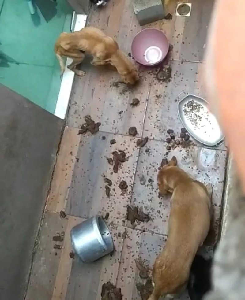 Maus-tratos em Divinópolis — Foto: Reprodução