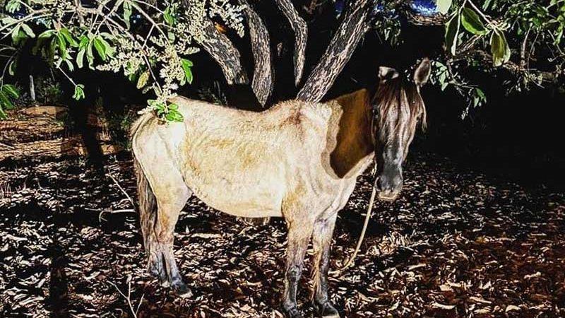 Cavalo estava amarrado em uma árvore dentro de um lote em Dores do Indaiá — Foto: Polícia Militar/Divulgação