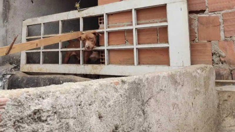 Um dos cães resgatados na ação — Foto: Polícia Civil/Divulgação