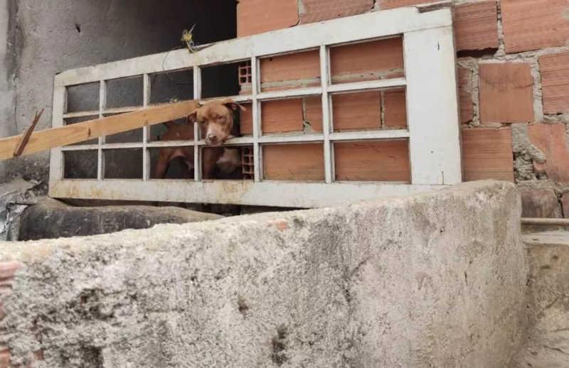 Polícia Civil resgata 5 cães em situação de maus-tratos em casa do bairro Ipiranga, em Juiz de Fora