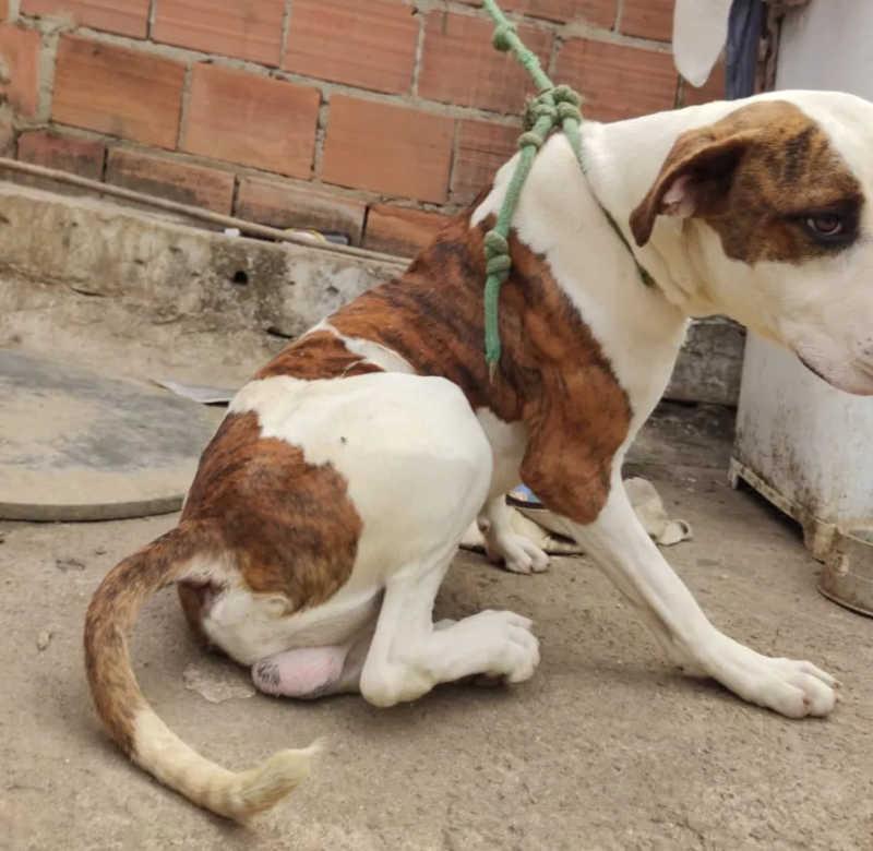 Os animais ficarão disponíveis para adoção — Foto: Polícia Civil/Divulgação