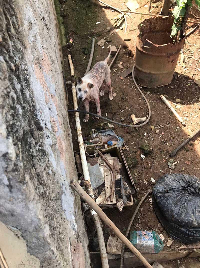 Ambiente insalubre onde vivia o animal — Foto: Polícia Militar do Meio Ambiente/Divulgação