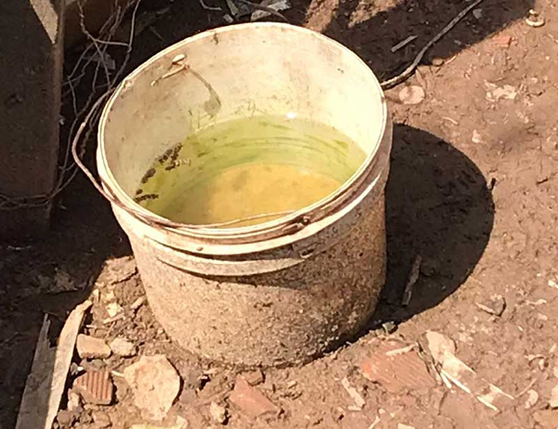 Pote de água oferecido ao cachorro — Foto: Polícia Militar do Meio Ambiente/Divugação