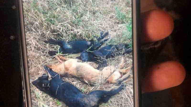 Polícia Civil apura denúncia de cães mortos a pauladas em Santos Dumont, MG