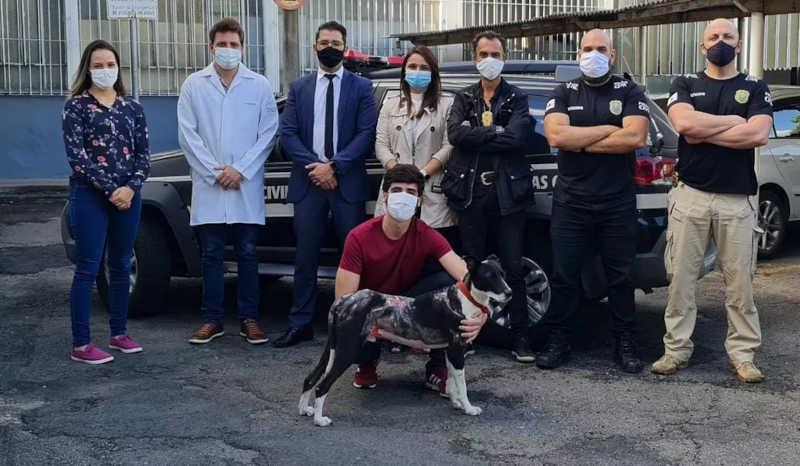 Polícia Civil prende suspeito de colocar fogo no cachorro da ex-namorada em Poços de Caldas, MG