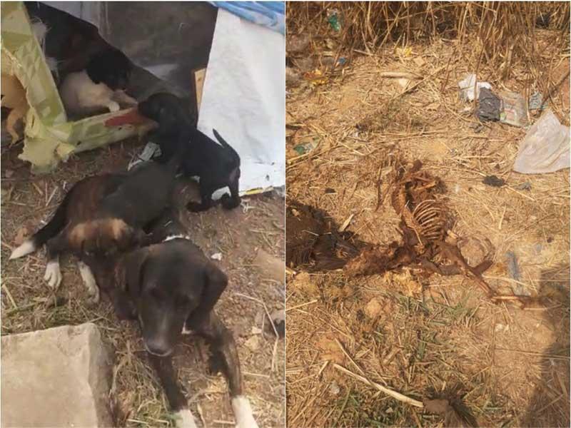 Ativistas denunciam abandono e morte de animais em mata de Ribeirão das Neves, MG; vídeo