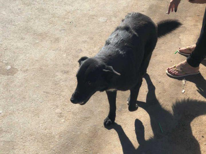 Cachorro envolvido na ocorrência — Foto: Polícia Civil/Divulgação