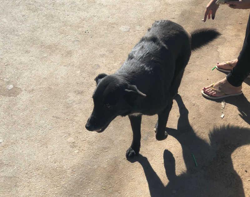 Jovem é indiciado por maus-tratos após agredir cachorro com pedaço de madeira em Santos Dumont, MG