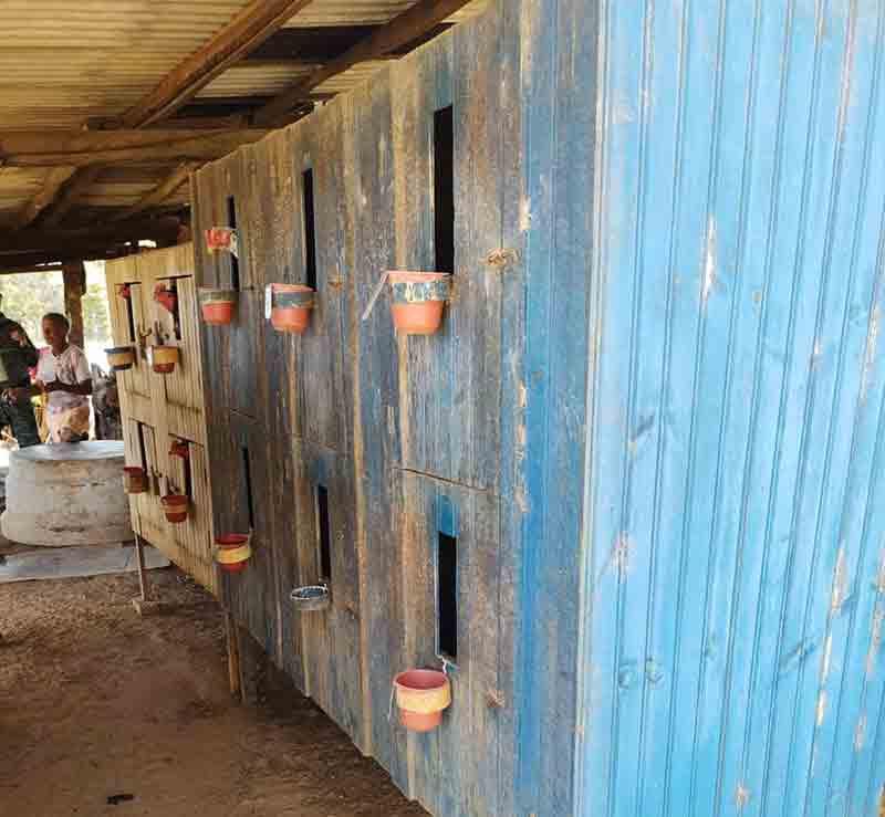 Abrigos para galos que participavam de rinha em chácara na região de Soares, em Paracatu — Foto: Polícia Militar de Meio Ambiente
