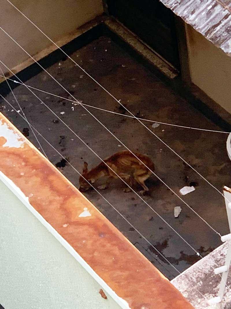 Cães em situação de maus-tratos são socorridos em Uberaba, MG; moradora deixou porta de casa aberta e não foi encontrada; vídeo