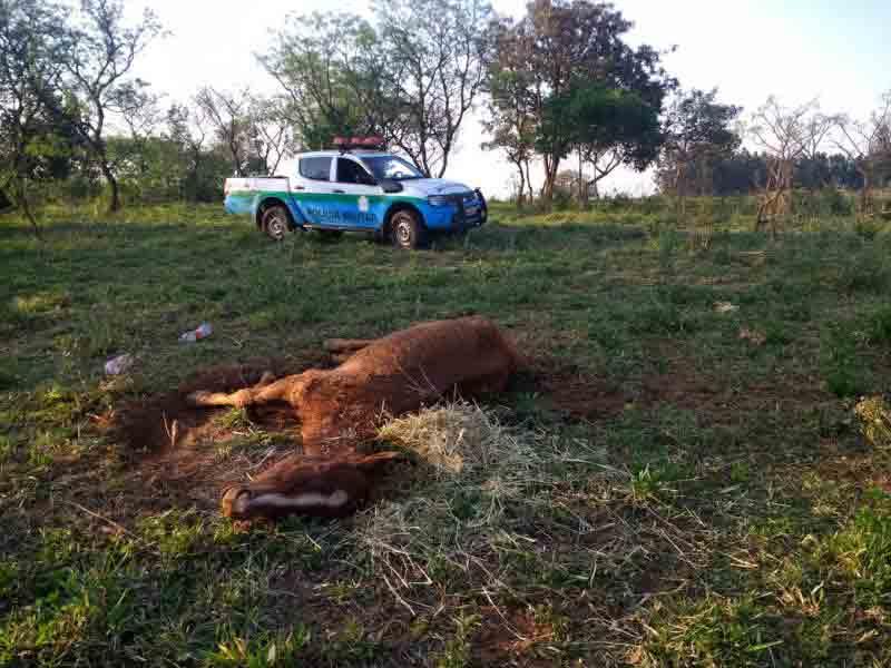 Polícia de Amambai (MS) autua infrator por maus-tratos ao deixar égua doente ao relento sem alimento e água