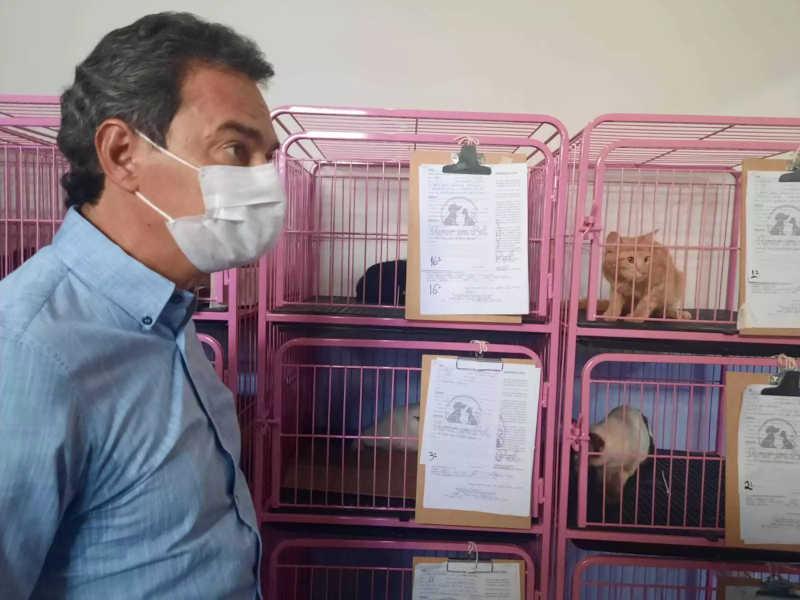 Com clínica credenciada, prefeitura vai castrar mais de 1,2 mil animais por mês em Campo Grande, MS