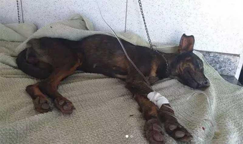 Com dívida de R$ 27 mil, ONG pede ajuda para salvar mais de 160 animais em Campo Grande, MS