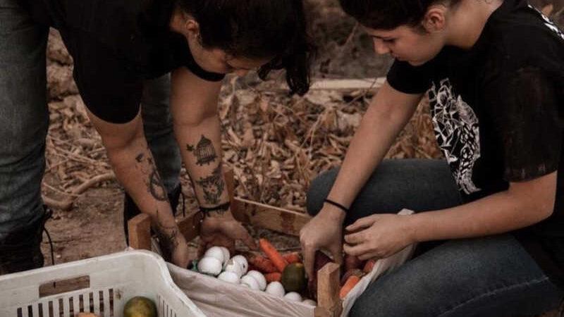 Associação arrecada frutas e ovos para animais que estão sofrendo com as queimadas e a seca no Pantanal de MT — Foto: Associação É o bicho MT
