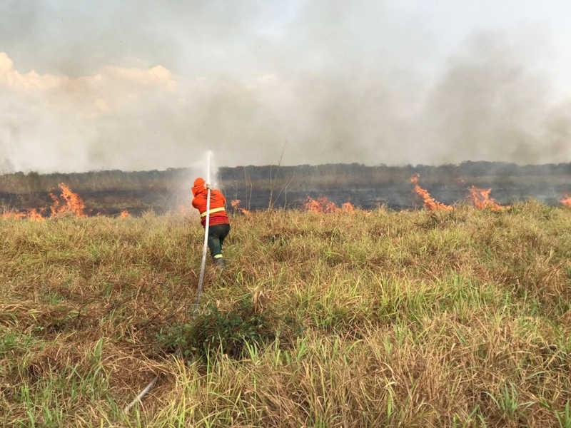 S.OS. Pantanal e Corpo de Bombeiros combatem incêndio no Parque Encontro das Águas — Foto: Gustavo Figueiroa