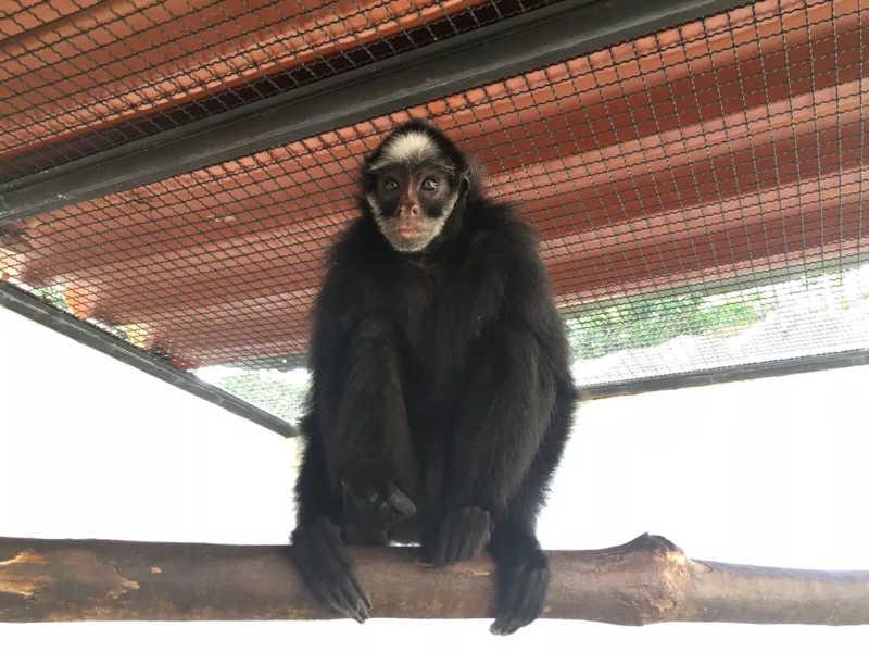 Animal passou por processo de reabilitação — Foto: Divulgação