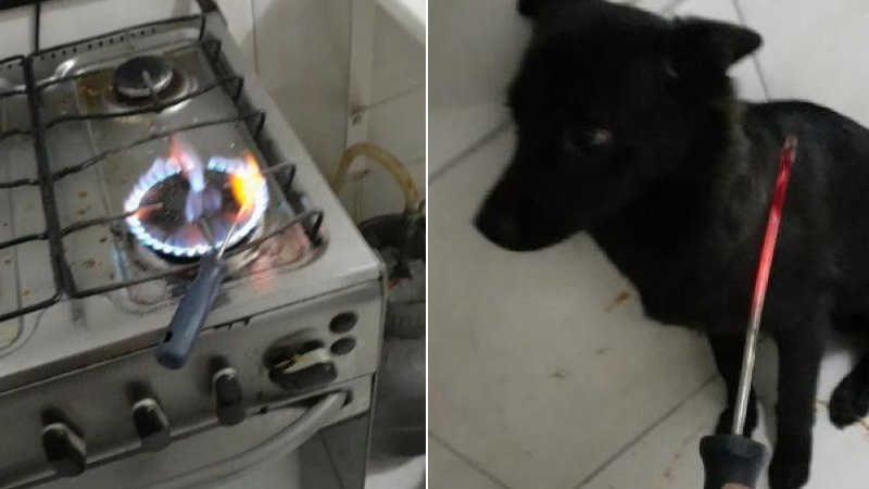 Após término, homem esquenta chave de fenda para torturar cachorro; vídeo