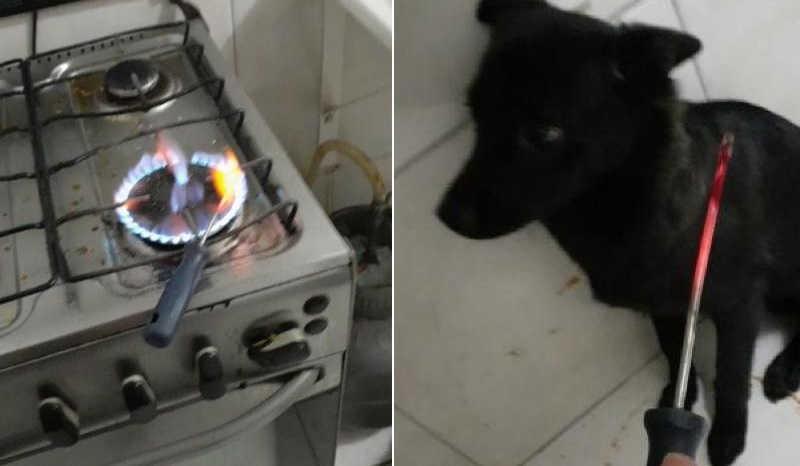 Após término com companheira, homem esquenta chave de fenda para torturar cachorro em GO