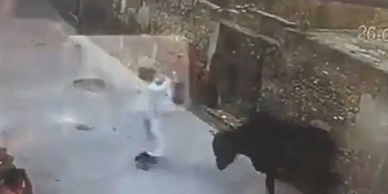Em vídeo impactante, homem ataca boi com pedaço de madeira e animal revida; assista