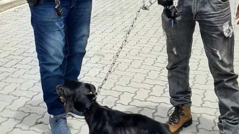 Animais estavam bastante doentes e foram levados para Hospital Veterinário — Foto: Ascom/Dema