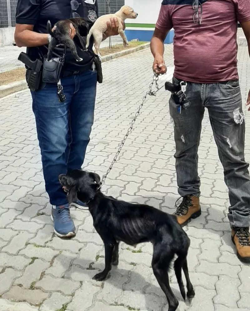 Três cães são resgatados após denúncia de maus-tratos em Belém, PA; outros dois morreram