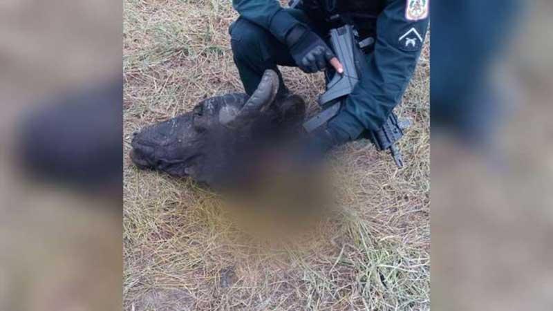 Criminosos invadem casas e realizam massacre de animais em municípios do Marajó, PA