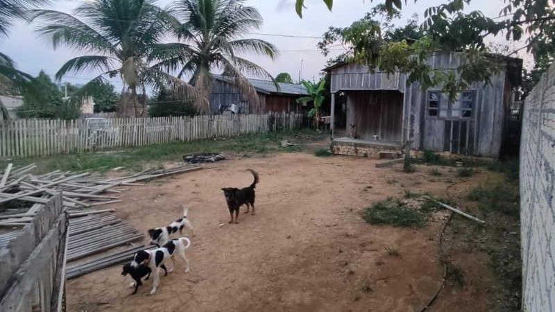 Cachorros são vítimas de maus-tratos em Novo Progresso, no Pará. — Foto: Reprodução / PM