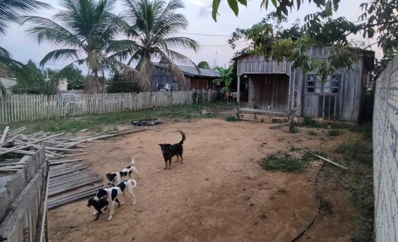 Mulher confessa maus-tratos contra cachorros em Novo Progresso, no PA