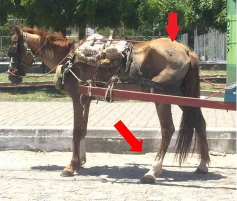 MP requer na Justiça o fim da exploração e maus-tratos de animais usados como tração de carroças em João Pessoa, PB