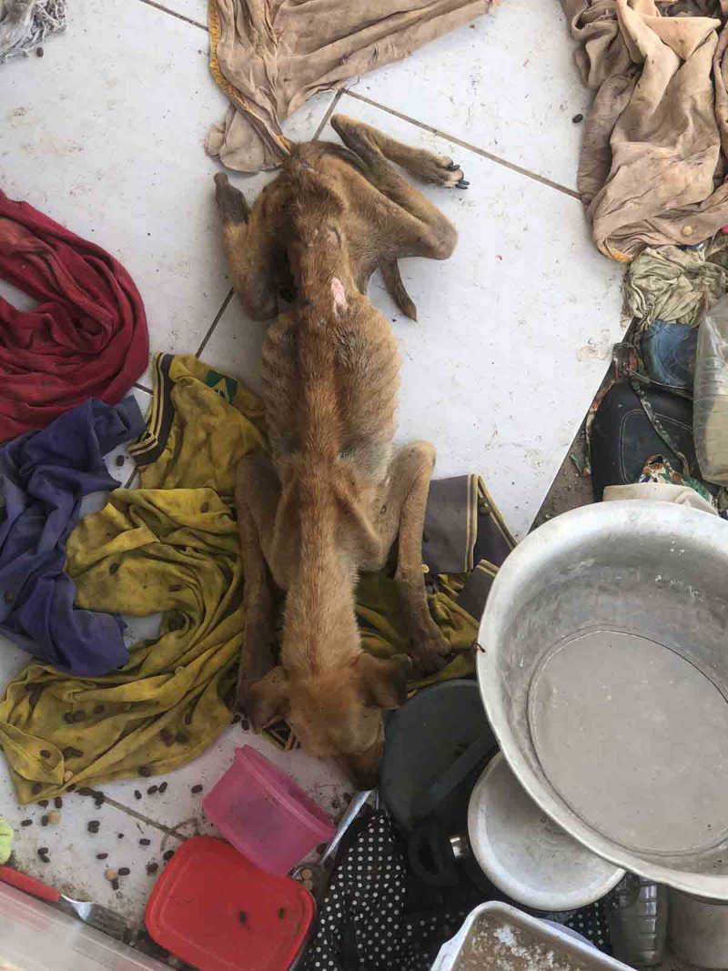 Polícia resgata cachorros mantidos em situação de maus-tratos em Monteiro, PB